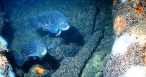 tog-underwater