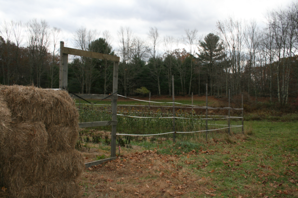 Cranberry Hill Farm - garden