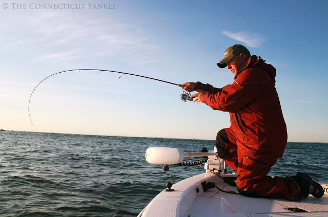 What s the prognosis for long island sound s fish we for Long island sound fishing