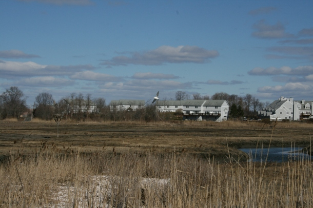 Marshes in East Haven