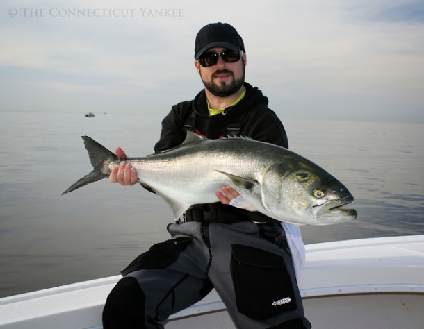Kierran Broatch catches a 15 lb. bluefish on Long Island Sound – October 2013 (Photo Credit: Kierran Broatch/ www.theconnecticutyankee.com)