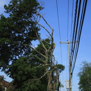 Another Chance to Protect Connecticut's Street Trees