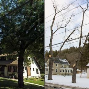 New Tree-Trimming Plan Cuts TooDeep