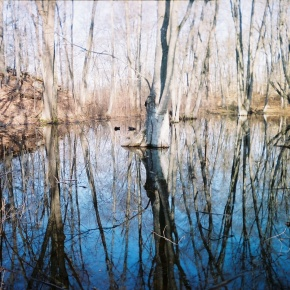 Preserving The Preserve: A Focus On Wetlands
