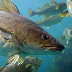 Two Words to Save the Fishing Industry: Sanctuary andSpillover