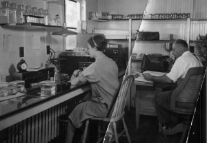 Victor Loosanoff and his wife Tamara working at the Milford Lab, probably in the mid-1930s.