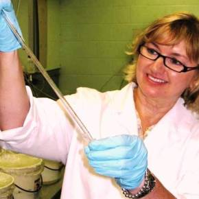 Milford Aquaculture Lab tests probiotics to protect oysters