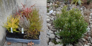 Examples of some of the local plants used to naturally filter stormwater.