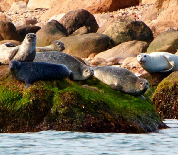 Plum Island's range of habitats. Photos courtesy of Robert Lorenz.
