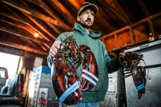 Ocean acidification threatens lobster and crabs, could cost fishermen their jobs, and shutter New England's iconic coastal villages. Photo: Scania USA.