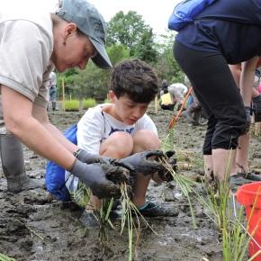 Photo Journal: Sunken Meadow State Park marshplanting