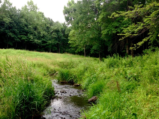 The brook bends in and out of grasses and forest.