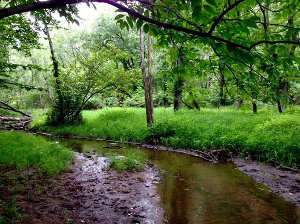 A grassy section of Wilmot Brook.