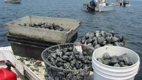 Guest post: How Hempstead Harbor's clam recovery is fueling the localeconomy.