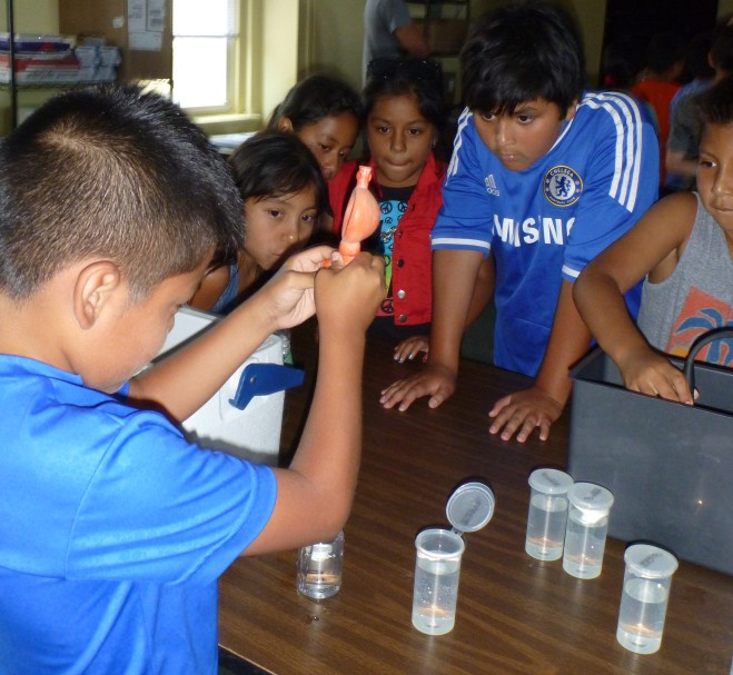 Students use a pipette to dilute samples.