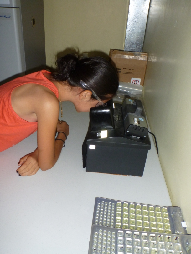 Student uses a UV light to identify florescence. Wells that glow are positive for Enterococcus—the fecal-indicating bacteria we test for.
