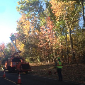 Around Connecticut, tree trimming harming townenvironments