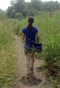 Walking among mosquitoes at Marshlands Conservancy