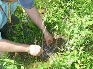 Matt Schlesinger setting a pitfall trap