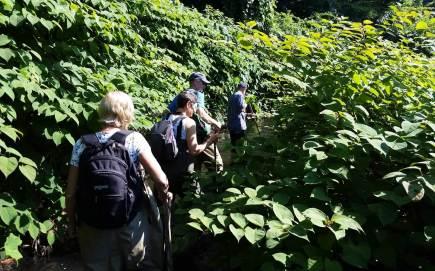 West River streamwalks bushwhacking