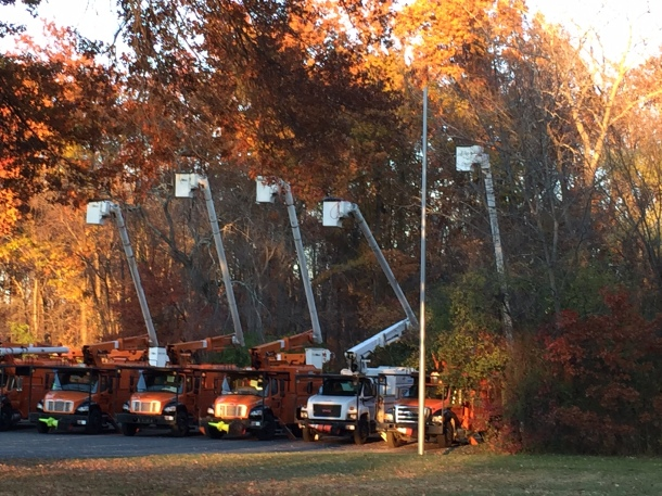 We're mobilizing residents and towns to protect roadside trees.