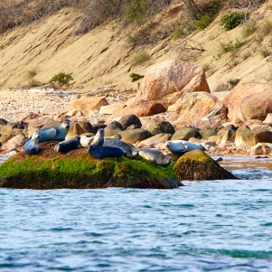 W-51 Lorenz_BigO2_1337- Seals