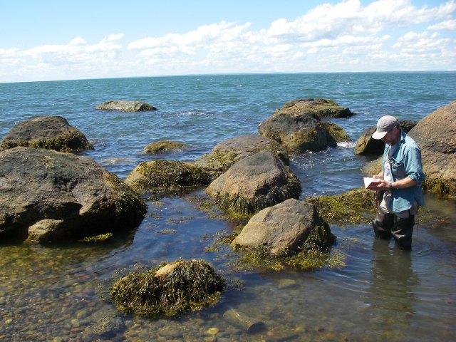 Greg Edinger studies a rocky intertidal zone. Photo: Erin White