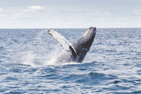 Whale Watch Out: Tips for Safe Whale Viewing