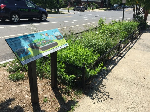 edgewood-bioswale-w-sign-june-2-2016