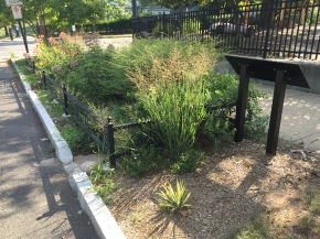 Green Infrastructure in New Haven: Bioswales and the West River