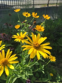 Plants in the bioswale include Joe Pye Weed, Yellow Coneflower, and Purple Coneflower (Echinacea).